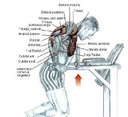 tipuri de flotari, flotari la paralele cu grupe de muschi; types of pushups, dips parallel muscles